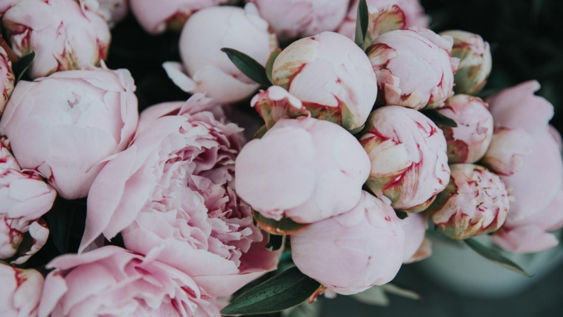 Peony pill offers hope for arthritis sufferers