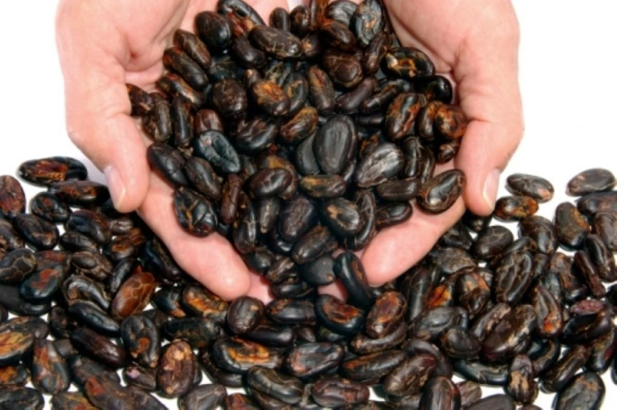 Could cocoa extract fight Alzheimer's?
