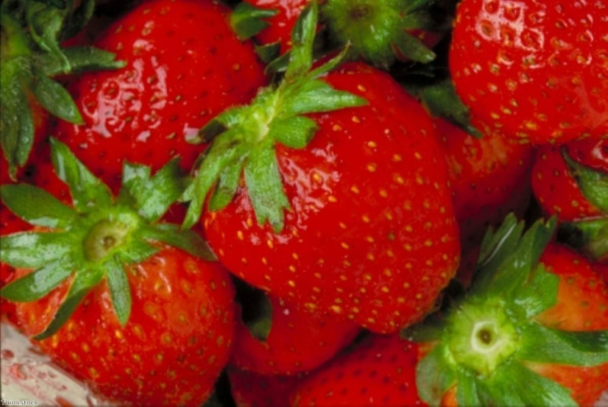Fruit-based compound offers hope for Huntington's treatment
