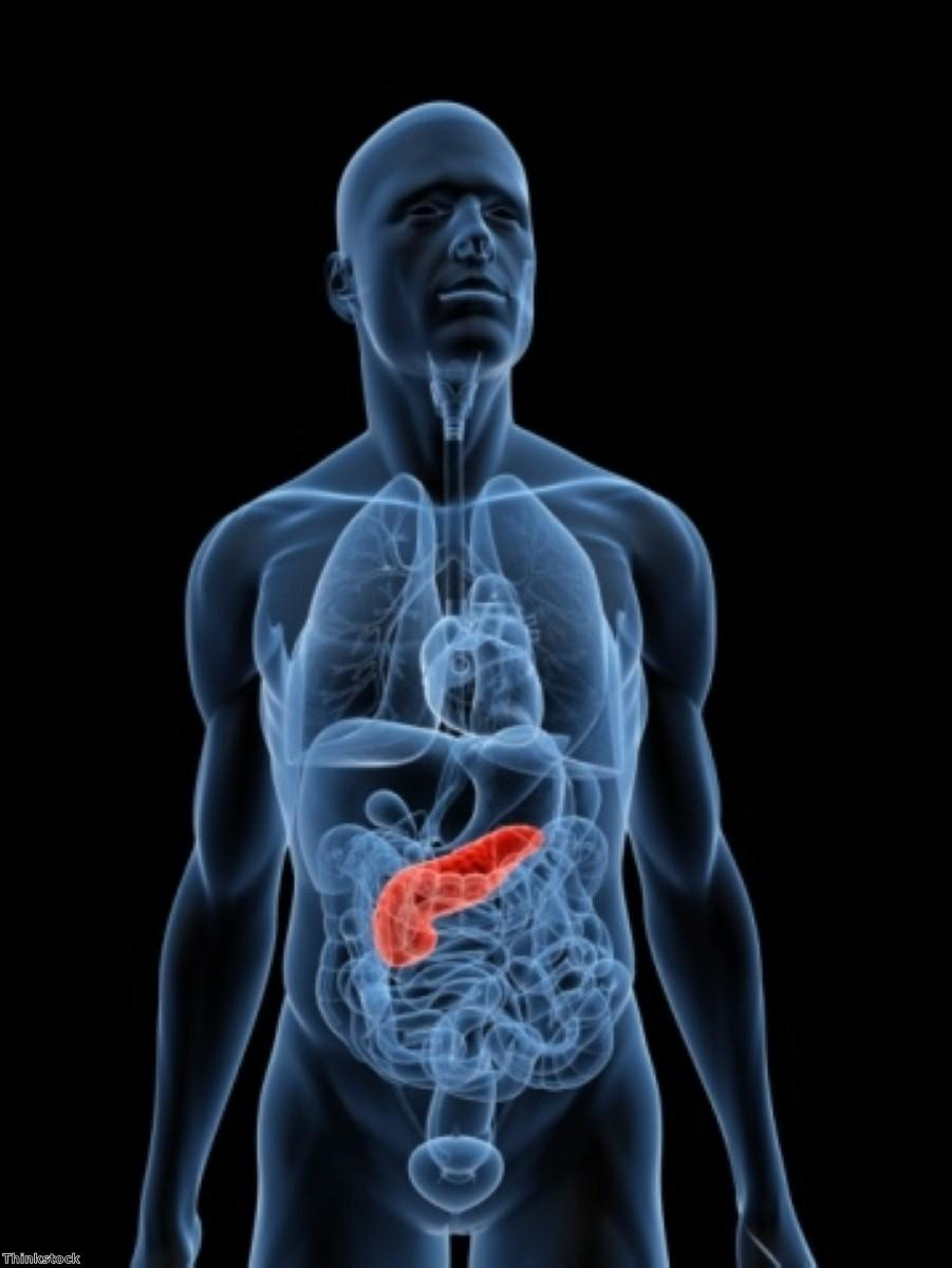 Cell discovery could lead to new pancreatitis treatment pathways