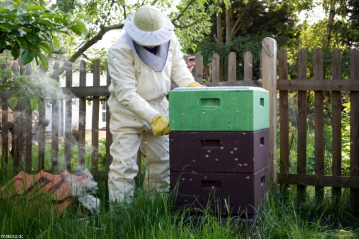 Do beehives hold the key to prostate cancer treatment?