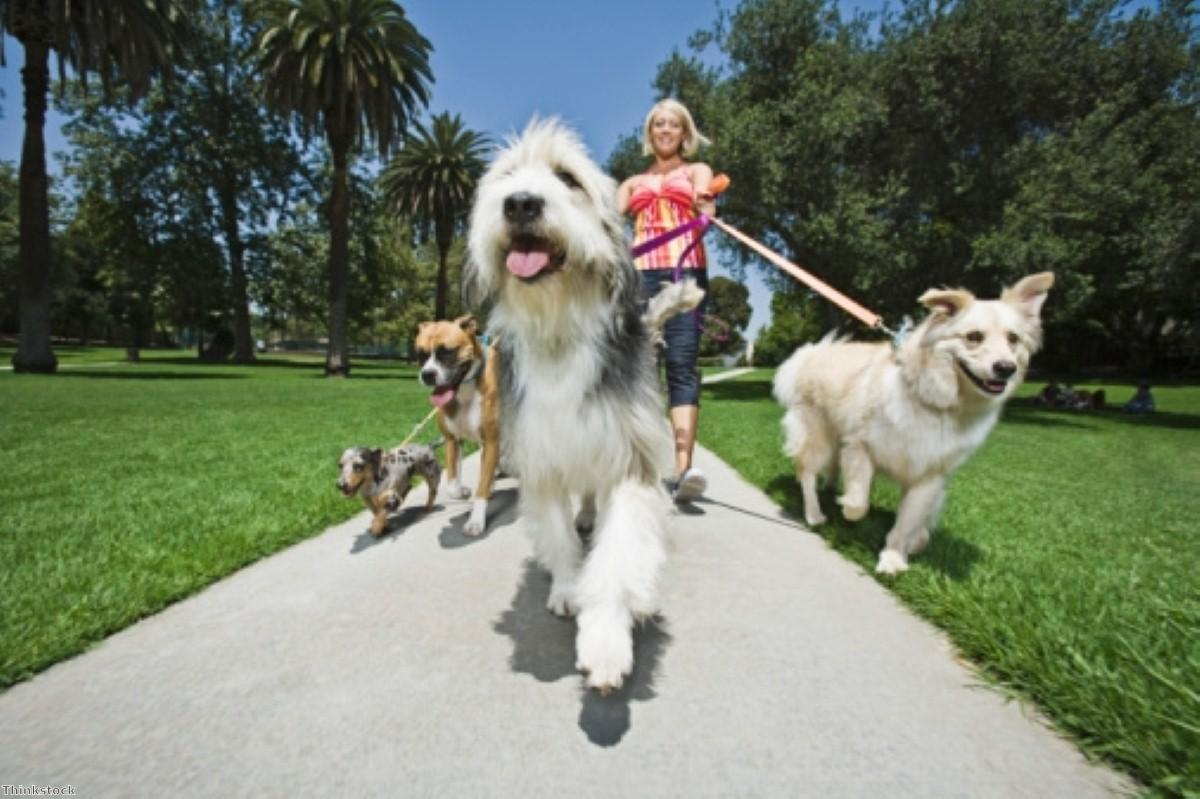 Can your dog help you get fit?