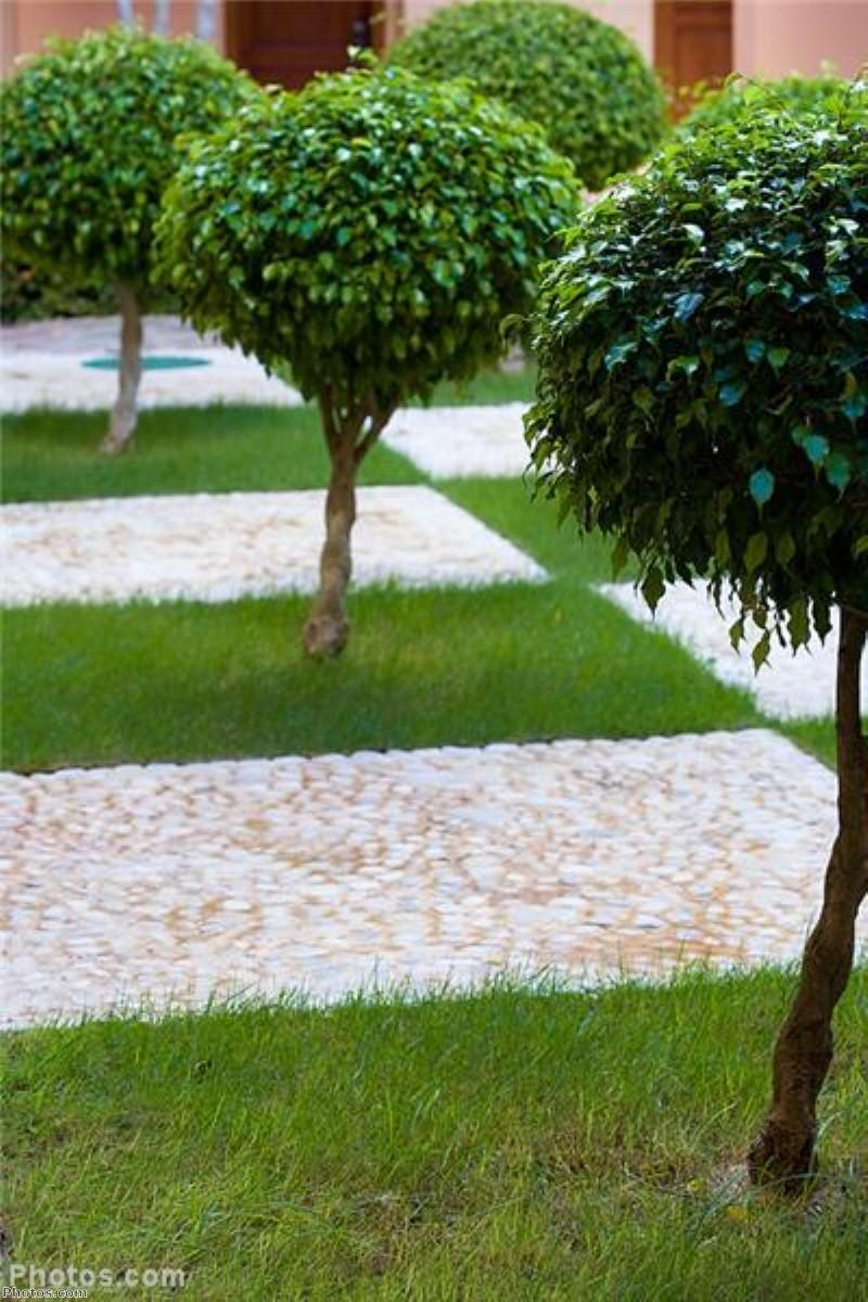 Gardens could help dementia care