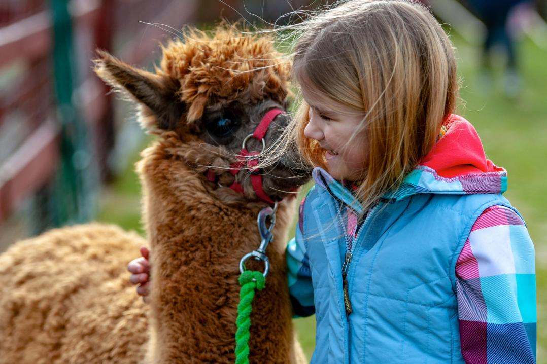 A child girl with a llama