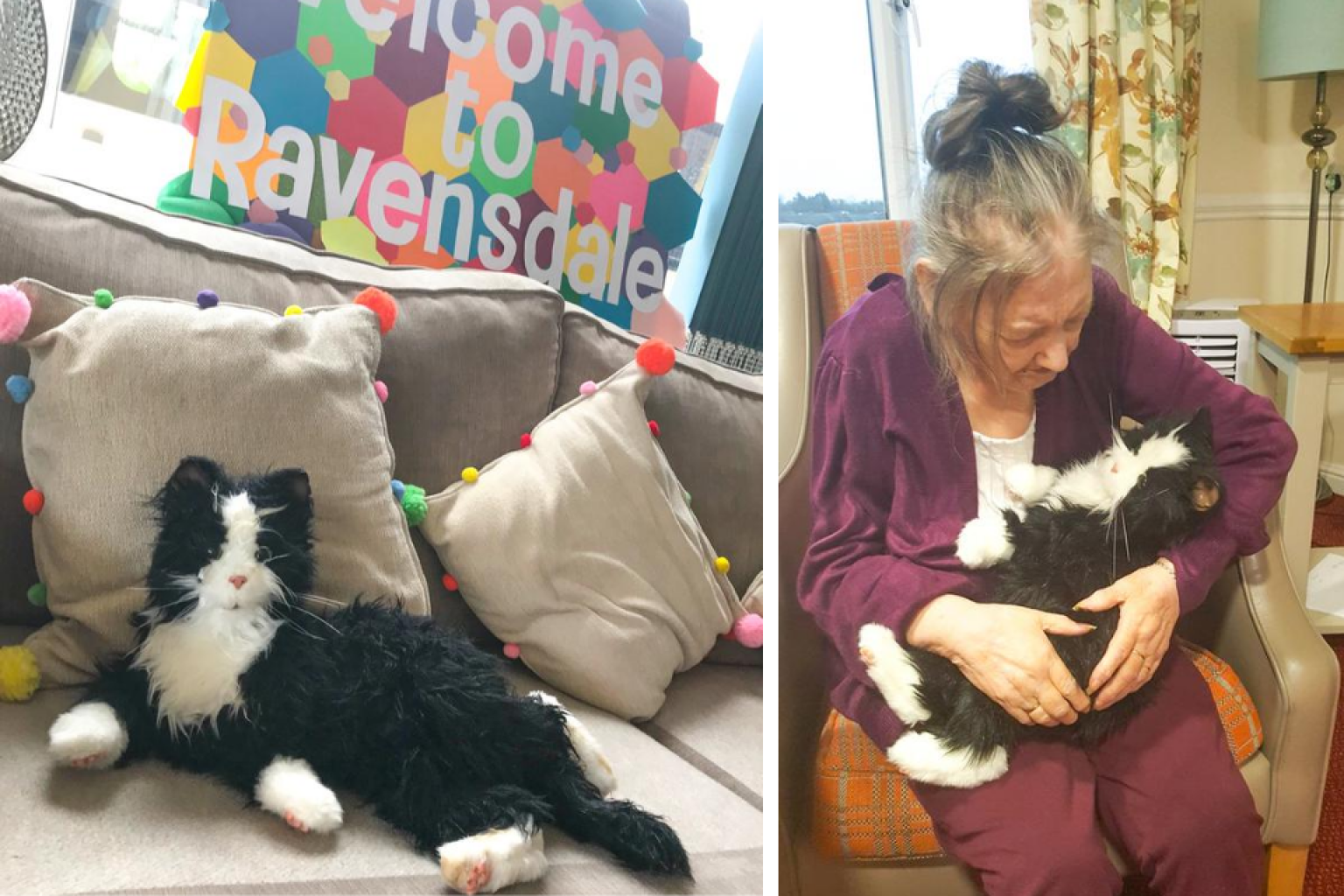 ravensdale dementia cat international cat day