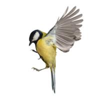 HURST bird