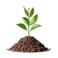 HURST plant