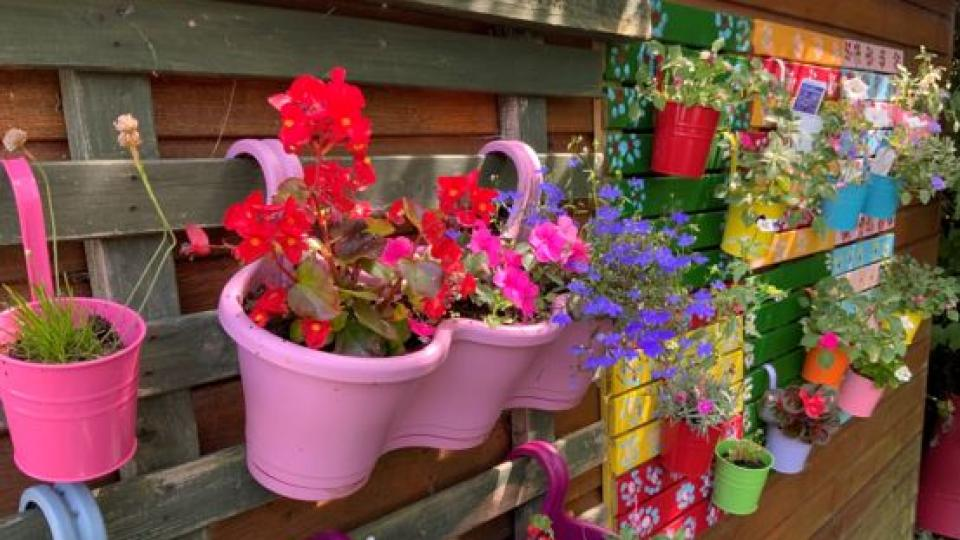 Bright and colourful plant pots