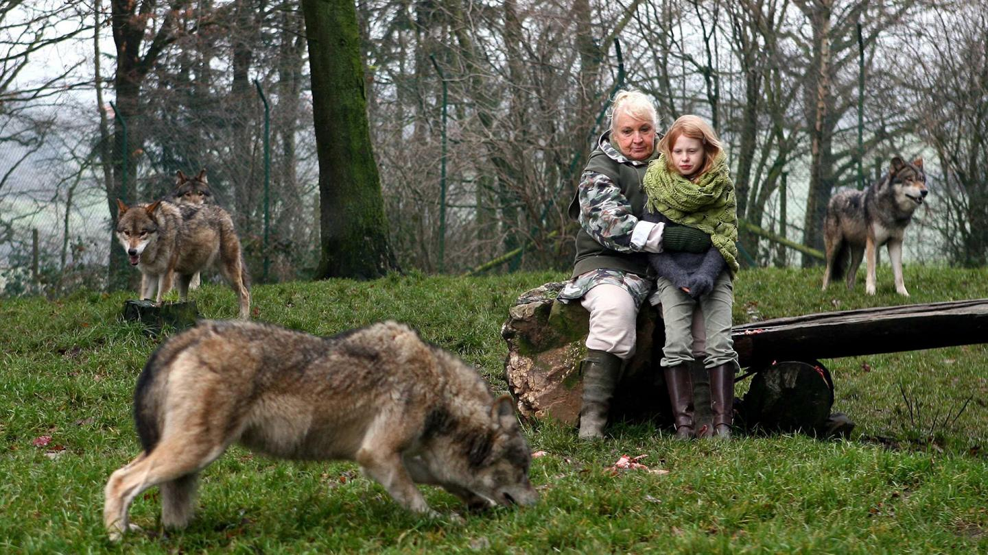 Misha And The Wolves (12A)