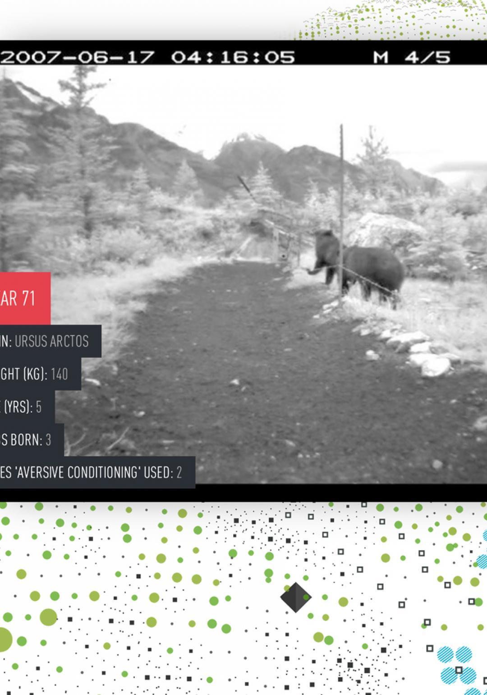 Digital Explorations:Bear71(2012)