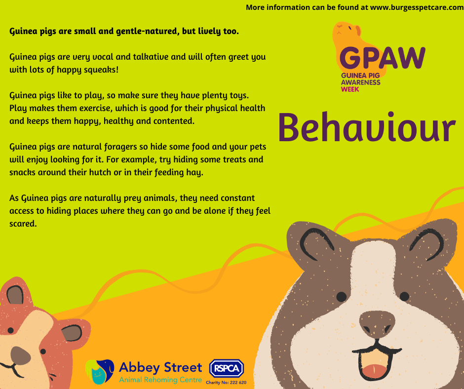 Your Guinea pigs' behaviour