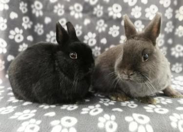Jake & Fluffy