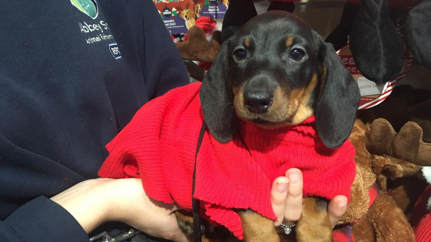 Dachshunds appeal update