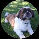 Dog testimonial