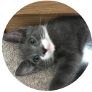 Cat testimonial