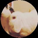 Alice (Rabbit)