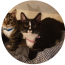 1 Pixie and Mew (Cat)