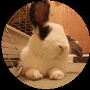 2 William (Rabbit)