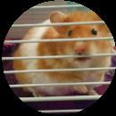Barbara (Hamster)