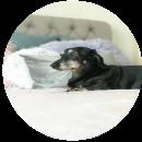 Bertie (Dog)