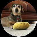 Charlie (Dog)