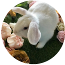 Fostering rabbits (Rabbit)