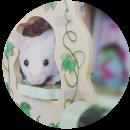 Cinderella and babies (Mice)
