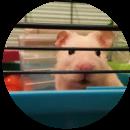 Flynn (Hamster)