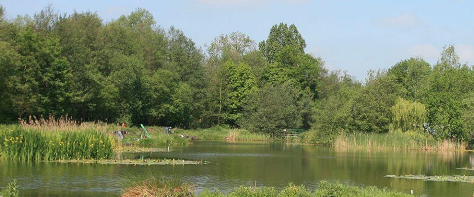 Whitearch Park